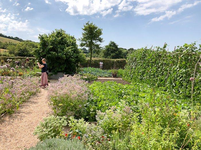 River Cottage veg herb patch course
